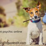 pet psychic – lost pet psychic – dog and cat psychic online