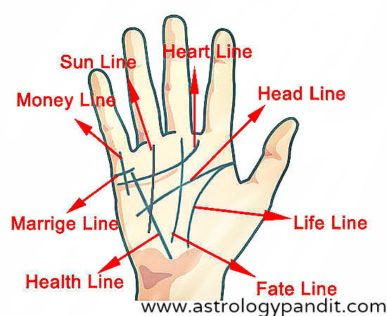 Before reading your palm, you should choose the right hand to read. There are different schools of thought on this matter. Some people think the right for female and left for male.